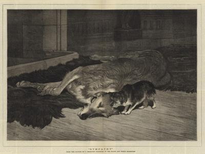 Sympathy by John Charlton