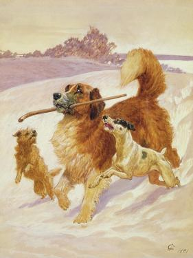 Three Dogs Playing in the Snow, 1881 by John Charlton