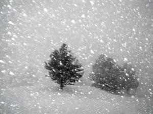 Sudden Snow Flurry by John Churchman