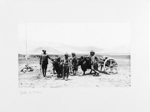 Yaks and Ekkas, 1903-04 by John Claude White