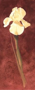 Iris by John Clayton