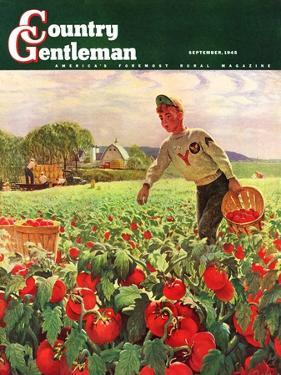 """""""Picking Tomatoes,"""" Country Gentleman Cover, September 1, 1945 by John Clymer"""