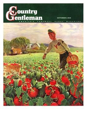 """Picking Tomatoes,"" Country Gentleman Cover, September 1, 1945 by John Clymer"