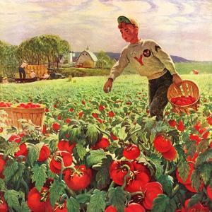 """""""Picking Tomatoes,""""September 1, 1945 by John Clymer"""