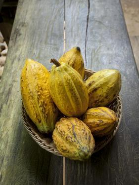 Costa Rica, La Virgen De Sarapiqui, Picked Cocoa Pods Used for Demonstration on How to Make Chocola by John Coletti