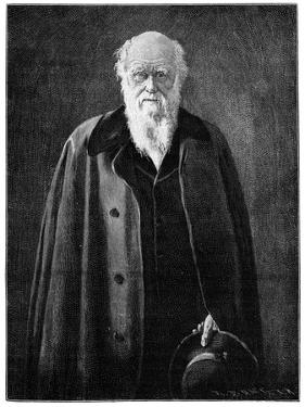 Charles Darwin, Renowned Naturalist and Thinker by John Collier
