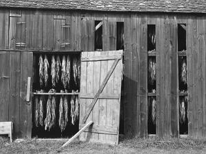 Tobacco Shed by John Collier