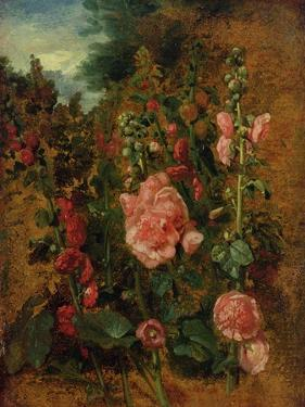 Study of Hollyhocks, C.1826 (Oil on Board) by John Constable