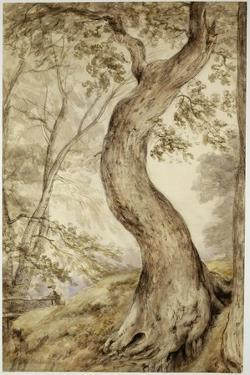 Tree at Helmingham, C.1800 by John Constable