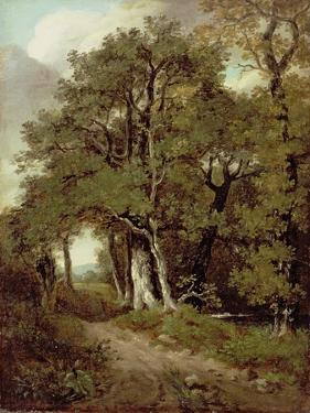 Wooded Path by John Constable