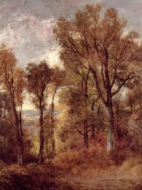 Woodland View in Suffolk by John Constable
