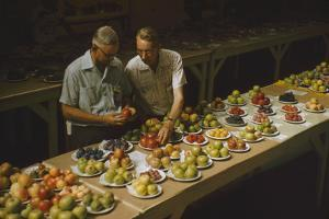 1955: Judges Examining Produce Entries in the Agriculture Building at the Iowa State Fair by John Dominis
