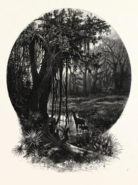 A Hummock, Florida by John Douglas Woodward