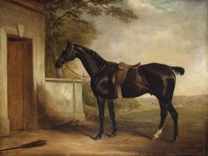 Portrait of Buckle, First Lord Chesham's Hunter, 1836 by John E. Ferneley