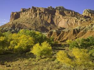 Cottonwood trees and sandstone bluffs in Capitol Reef National Park by John Eastcott & Yva Momatiuk