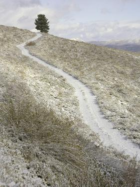 Snowy ranch road and lone tree in Inyo National Forest by John Eastcott & Yva Momatiuk