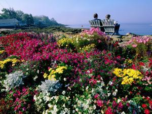 Couple Reading at Ocean Point Shoreline, Flowers in Foreground, Maine by John Elk III
