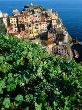 Manarola Town from Above, Cinque Terre, Liguria, Italy by John Elk III