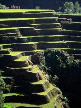 Rice Terraces, Ifugao Province, Luzon, Southern Tagalog, Philippines by John Elk III