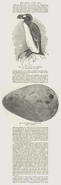 The Great Auk's Egg by John Everett Millais