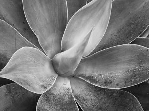 USA, California, Del Mar Succulents by John Ford
