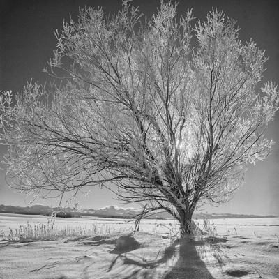 USA, Wyoming, Grand Teton National Park, Ice Tree