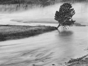 USA, Wyoming, Yellowstone, Firehole River and Tree by John Ford
