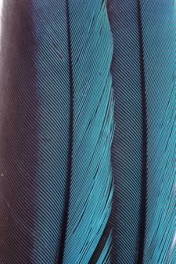 Feathers by John Foxx