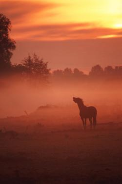 Horse at Sunrise by John Foxx