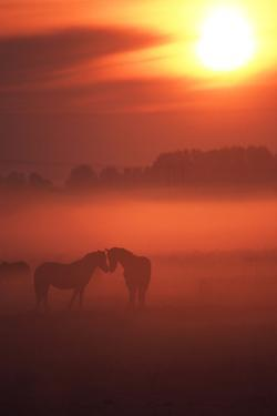 Two Horses at Sunset by John Foxx