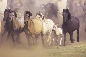 Wild Horses Running by John Foxx