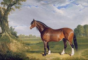 A Clydesdale Stallion, 1820 by John Frederick Herring I