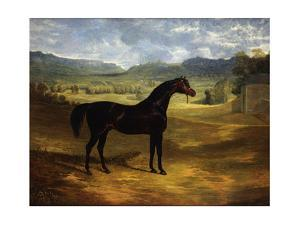 Jack Spigot, a Dark Bay Racehorse in a Paddock at Bolton Hall by John Frederick Herring I