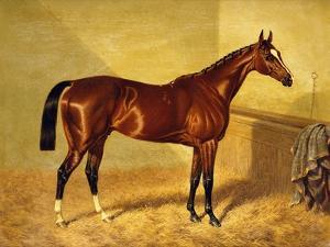 Orlando, a Bay Racehorse in a Loosebox, 1845 by John Frederick Herring I