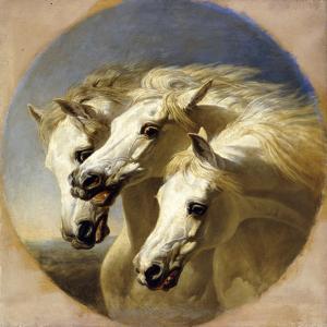 Pharaoh's Horses, 1848 by John Frederick Herring I