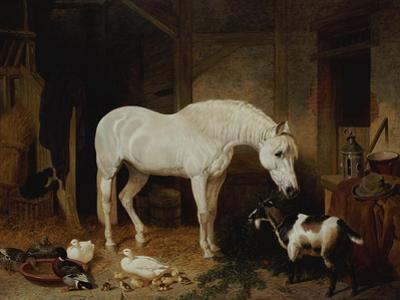Stable Companions by John Frederick Herring I
