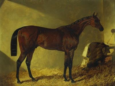 The Race Horse 'Merry Monarch' in a Stall by John Frederick Herring I