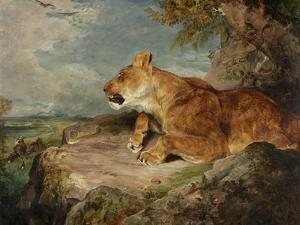 The Lioness, C.1824-27 by John Frederick Lewis