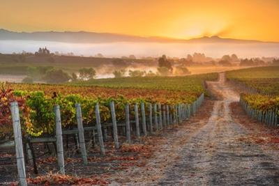 Vineyard Sunrise by John Gavrilis