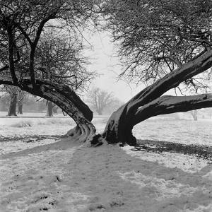 A Snow Scene in Richmond Park, Greater London by John Gay