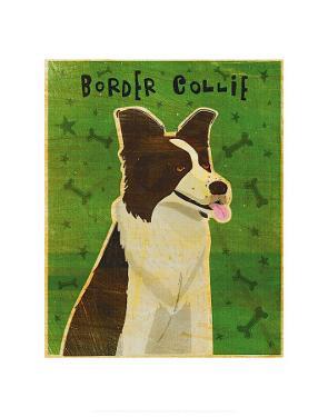 Border Collie by John Golden