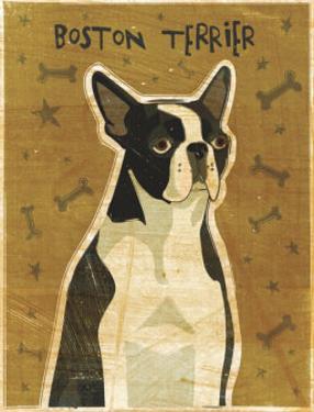 Boston Terrier by John Golden