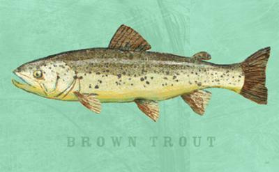 Brown Trout by John Golden