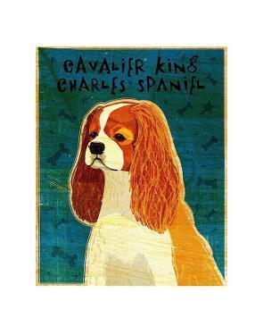 Cavalier King Charles (blenheim) by John Golden