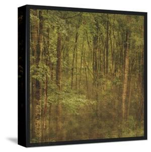 Fog in Mountain Trees by John Golden