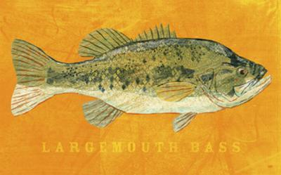 Largemouth Bass by John Golden