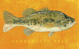 Largemouth Bass by John Golden