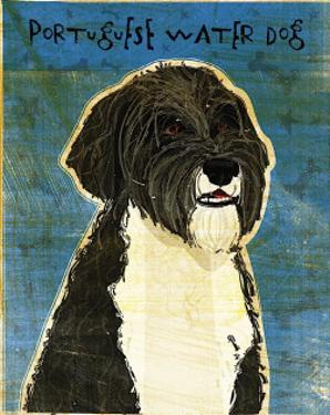 Portuguese Water Dog by John Golden