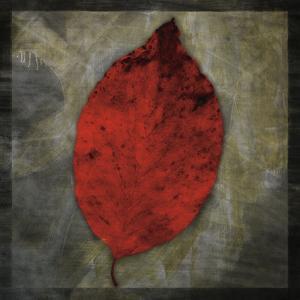 Red Dogwood by John Golden