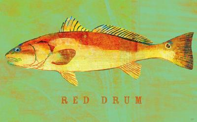 Red Drum by John Golden